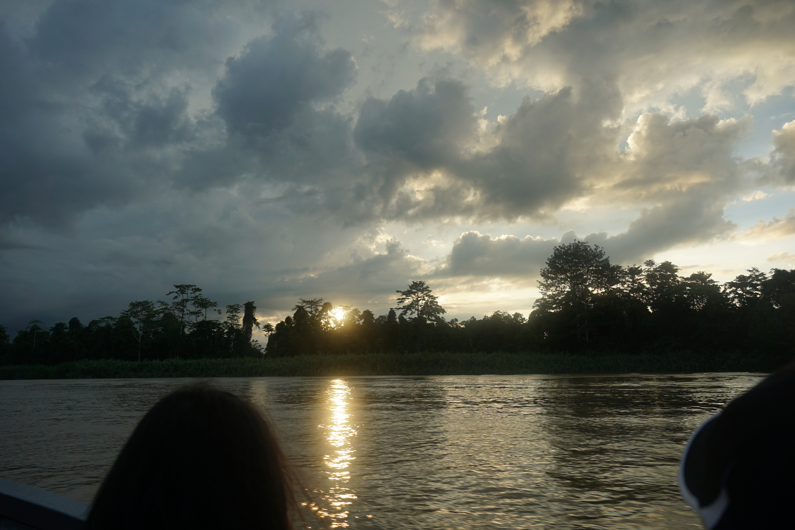 Wildlife Adventure of River Cruise in Kinabatangan River