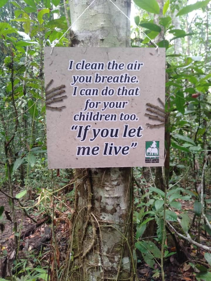 Save Our Trees – Nature Lodge Kinabatangan's Effort